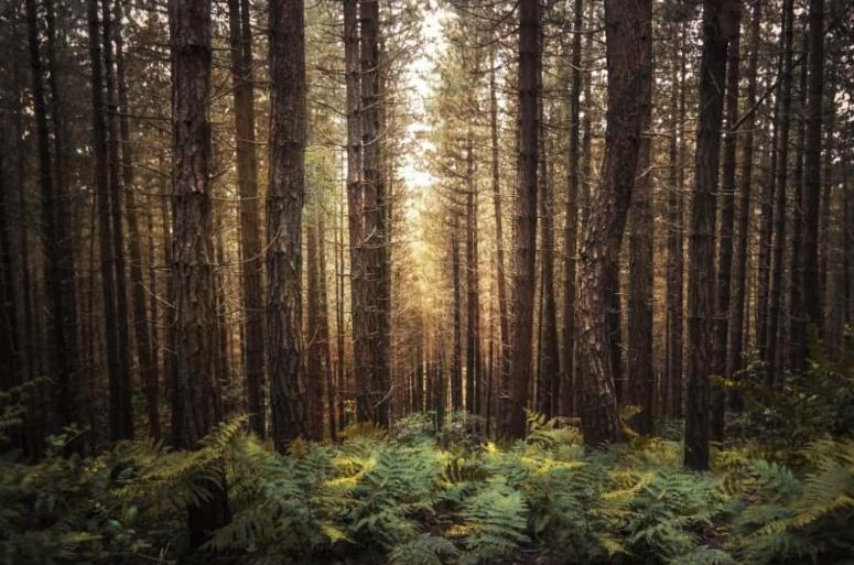 Barnwood zachthout in dordrecht